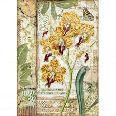 Stamperia - Amazonia - A4 Rice Paper - Orchid