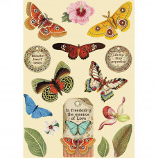 Stamperia - Amazonia - A5 Coloured Frame - Butterfly