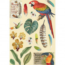 Stamperia - Amazonia - A5 Coloured Frame - Parrot